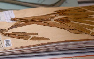 Un site Web dédié à l'Herbier de Nouvelle-Calédonie