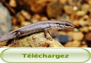 Télécharger la Présentation finale du projet RMINE et du SEMINAIRE « faune invasive » du 18/09/2015