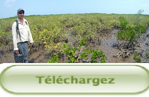 Télécharger la Présentation de la restitution finale du Projet Mangrove du 14/12/12
