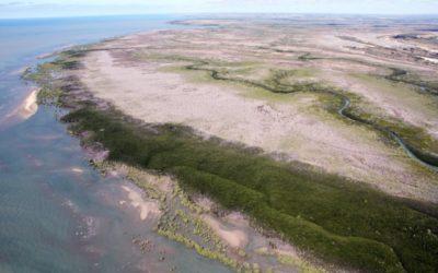 La mangrove «meurt de soif» en Australie – mars 2017